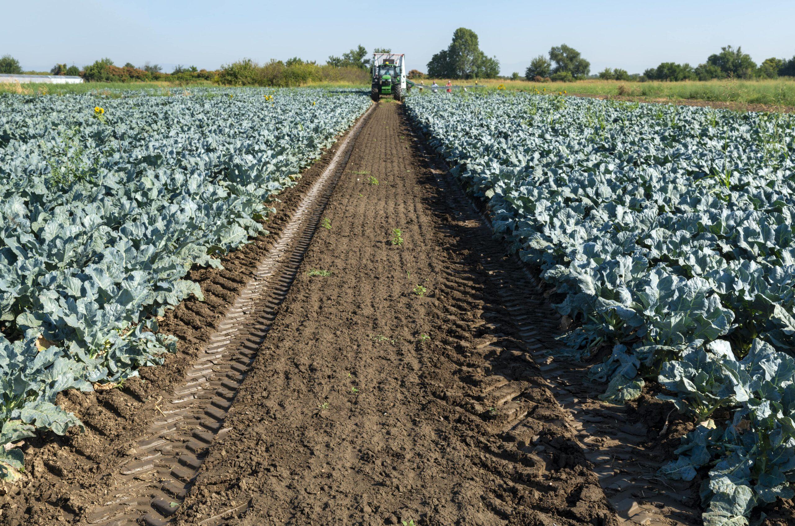 Aprobado el programa de ayudas para la realización de actuaciones de eficiencia energética en explotaciones agropecuarias